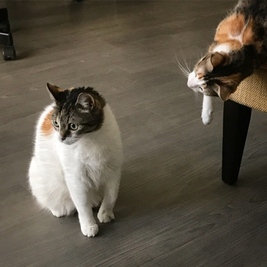 Mishi (left) and Yuki (right)