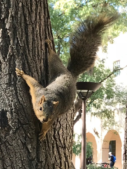 Caltech squirrel